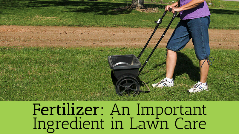 Fertilizer: An Important Ingredient in Lawn Care