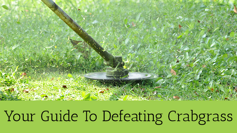 Your Guide To Defeating Crabgrass