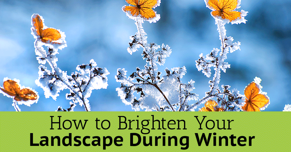 How to Brighten Your Landscape During Winter