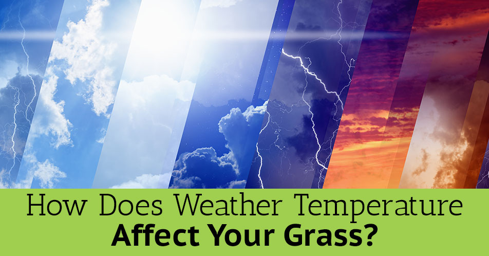 How Does Weather Temperature Affect Your Grass?