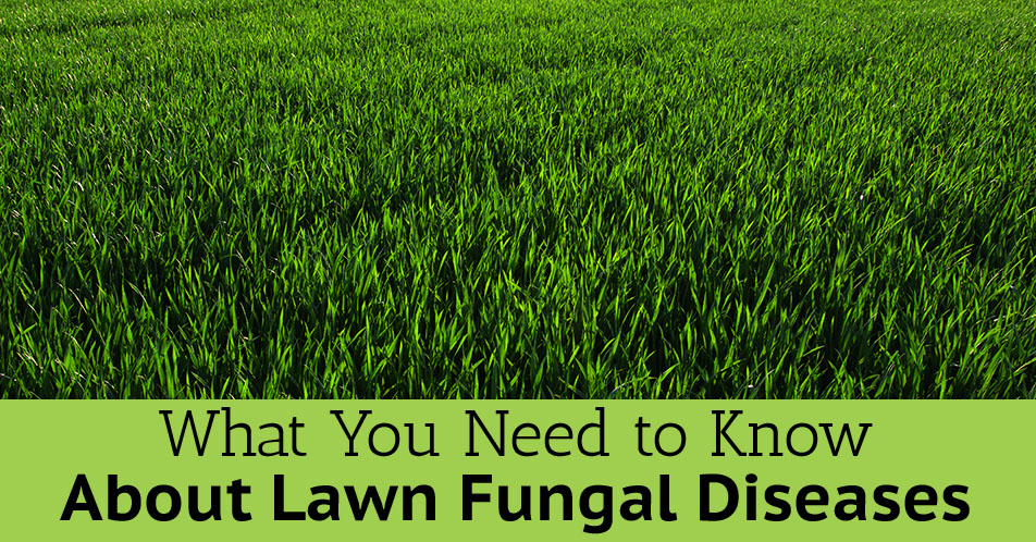What You Need to Know About Lawn Fungal Diseases