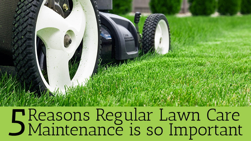 5 Reasons Why Regular Lawn Care Maintenance is so Important