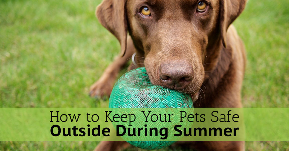 How to Keep Your Pets Safe Outside During Summer