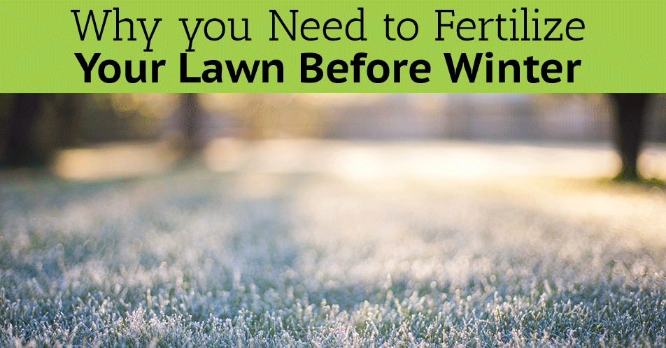 Why you Need to Fertilize Your Lawn Before Winter