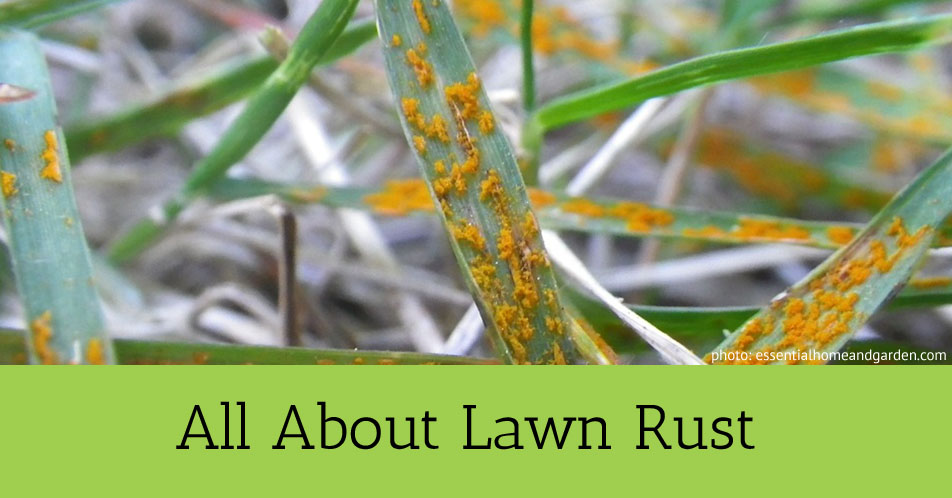 All About Lawn Rust