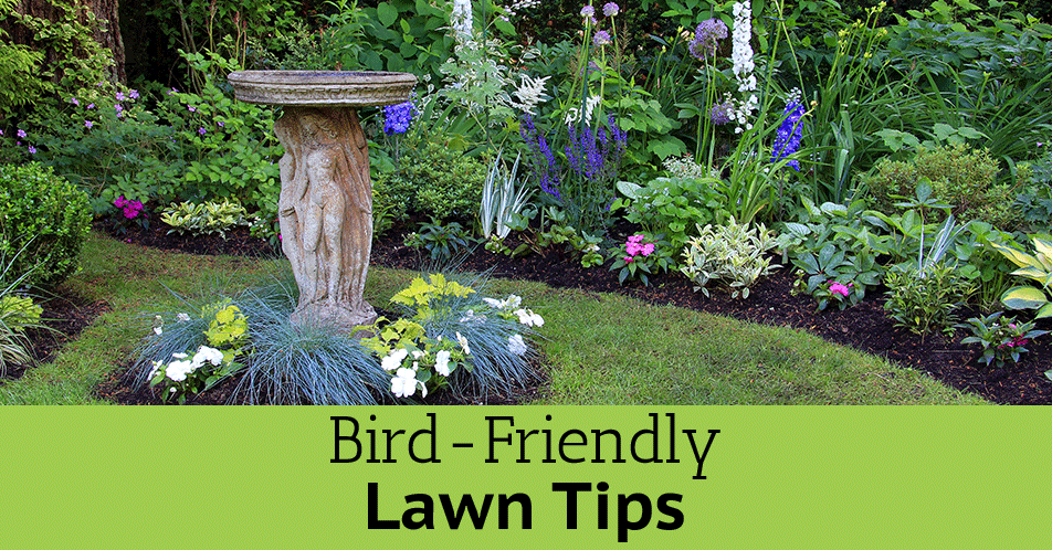 Bird-Friendly Lawn Tips