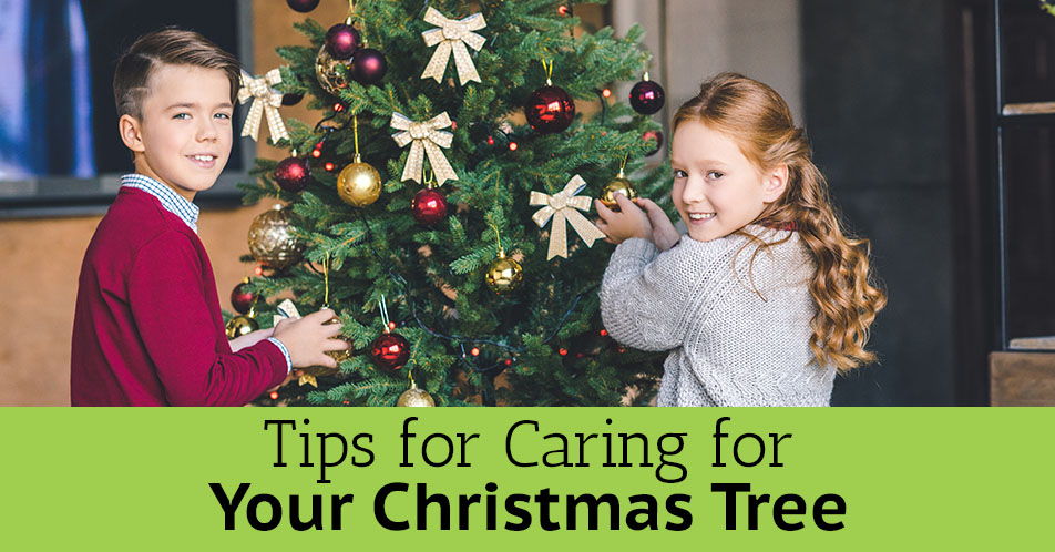 Tips for Caring for Your Christmas Tree