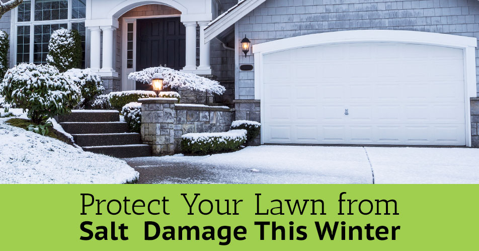Protect Your Lawn from Salt  Damage This Winter