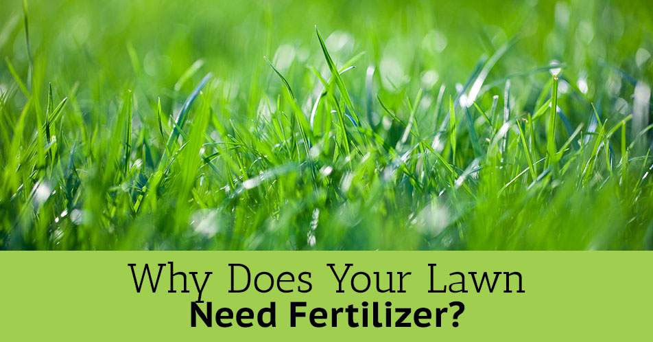 Why Does Your Lawn Need Fertilizer?